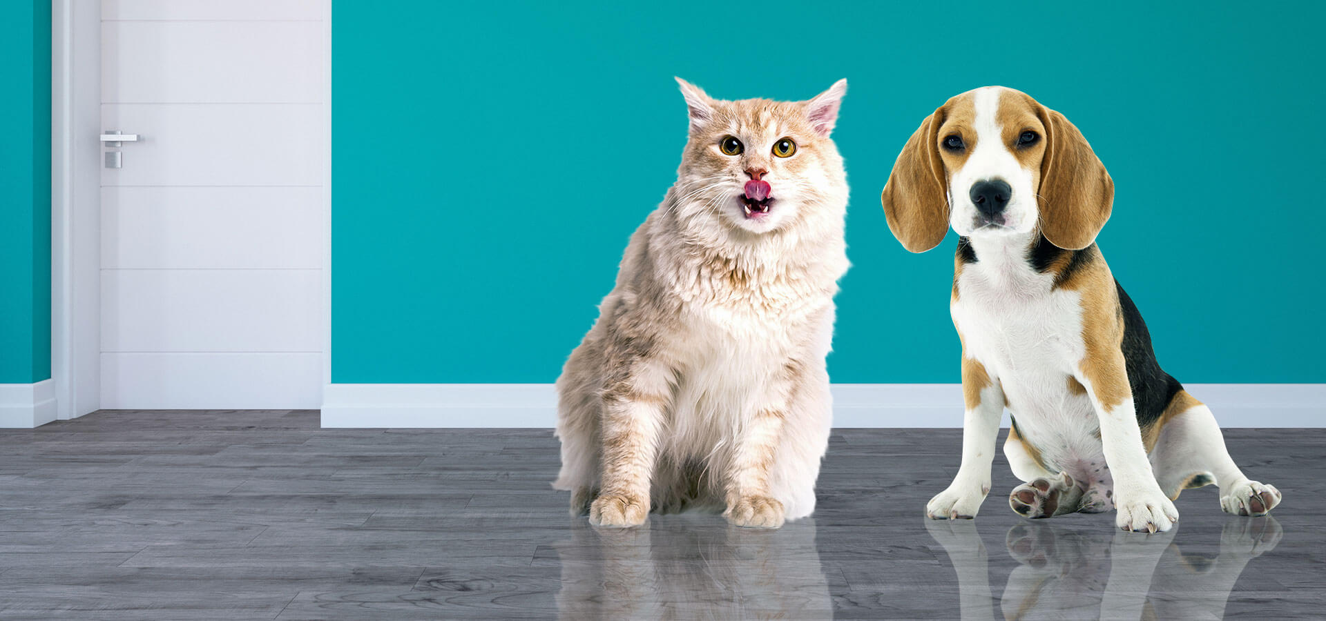 Dog and Cat feed supplements Manufacturers