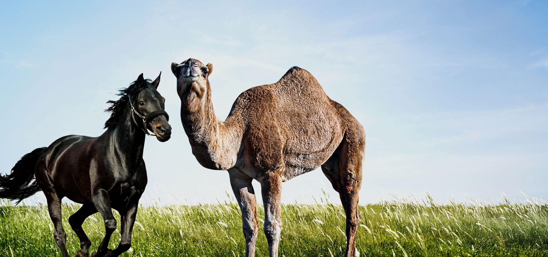 Horse and Camel feed supplement Suppliers in Vijayawada India