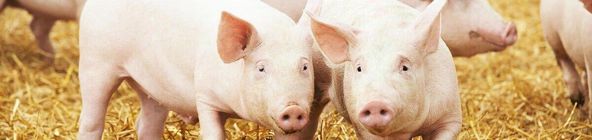 Swine feed supplements manufacturers in Vijayawada