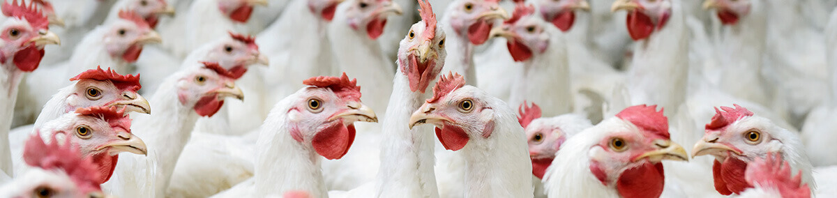 poultry feed manufacturers in Vijayawada